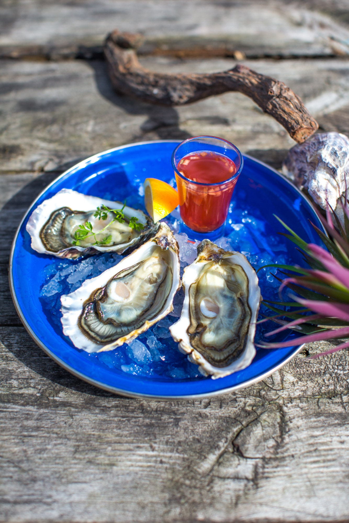 Oysters, Dorset- Food photographer