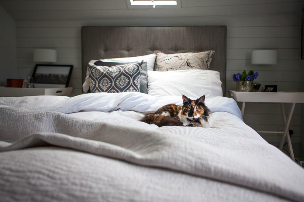 Interiors Photography Dorset-Lara Jane Thorpe- bed with cat