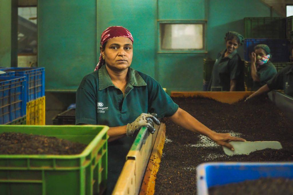 Tea, Sri Lanka - Travel photographer