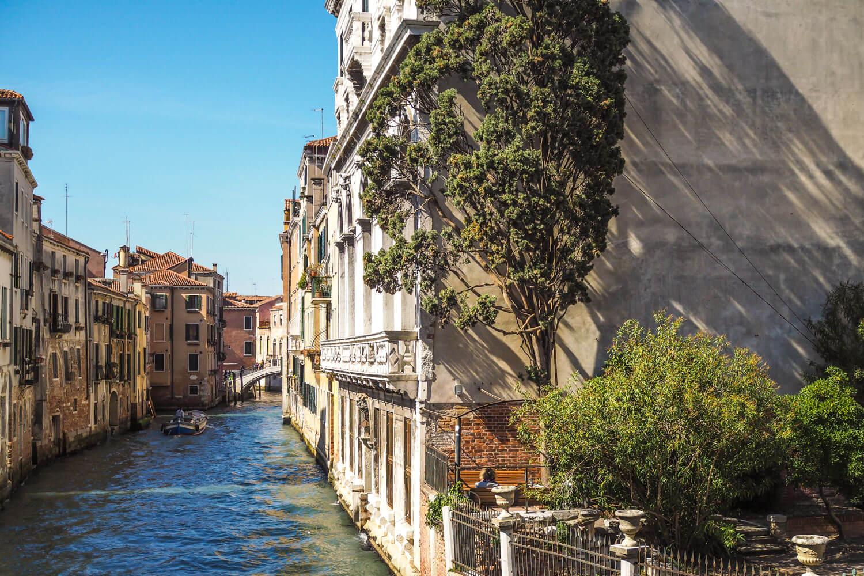 Venice,tree, travel photography