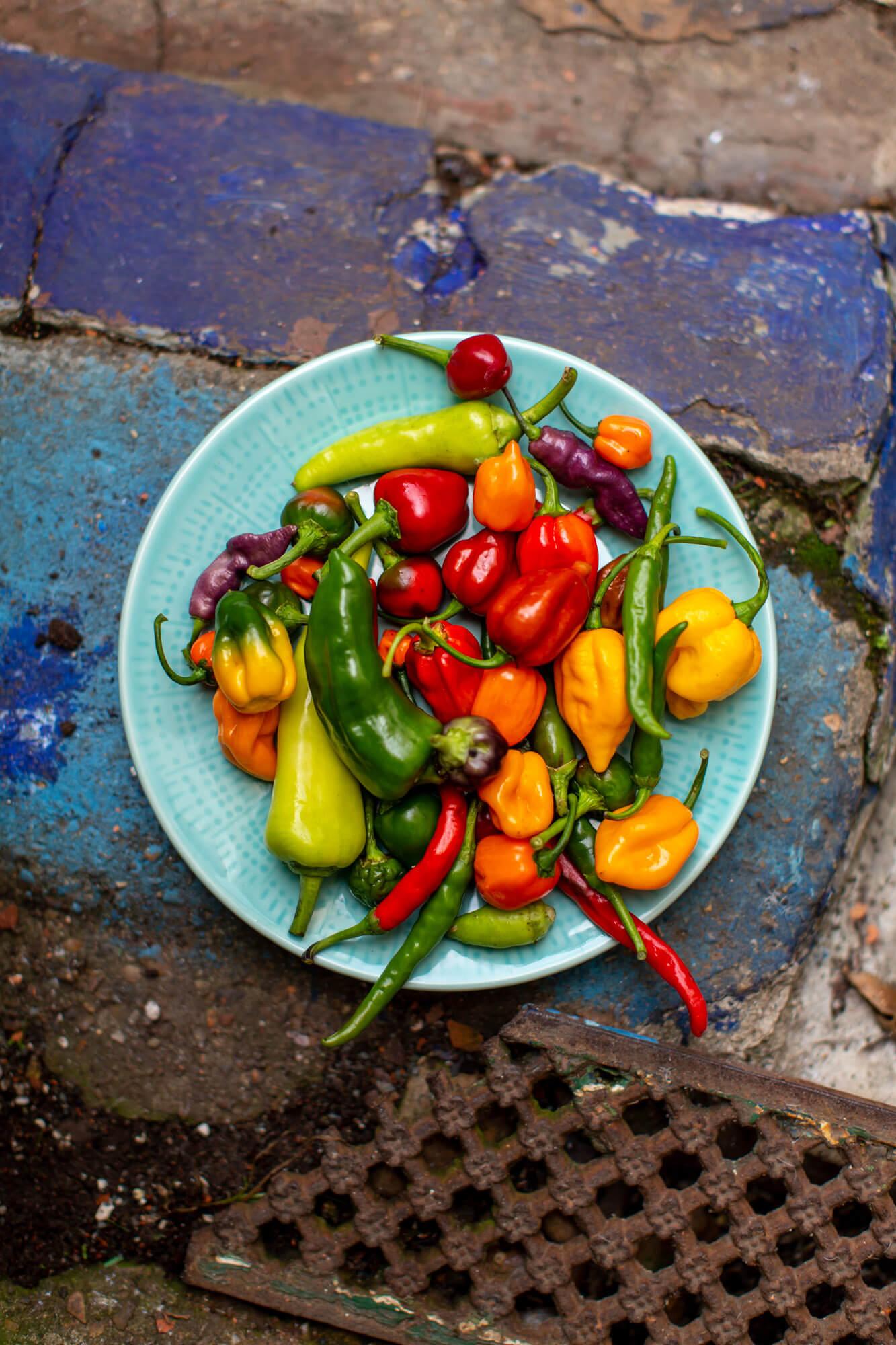 food photographer- chillies- dorset