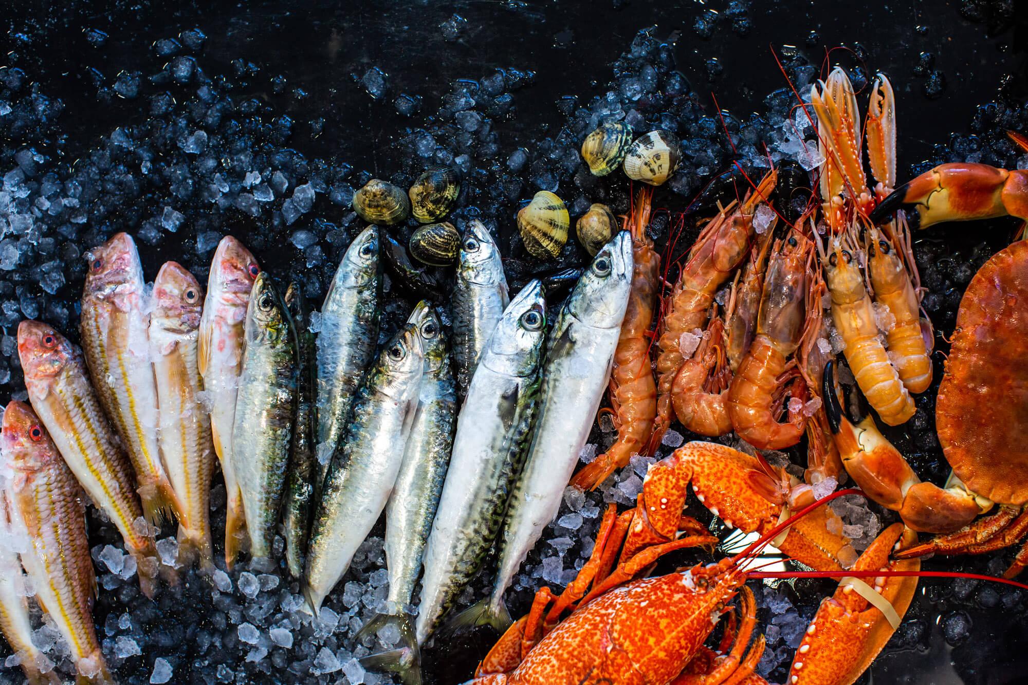 food photographer- fish- dorset